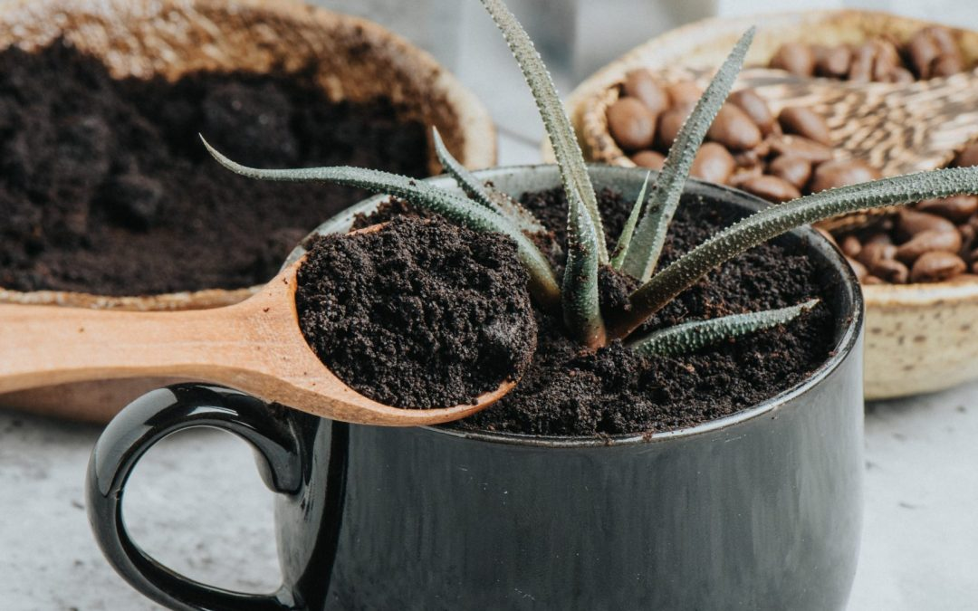 Coffee Grounds for Gardening