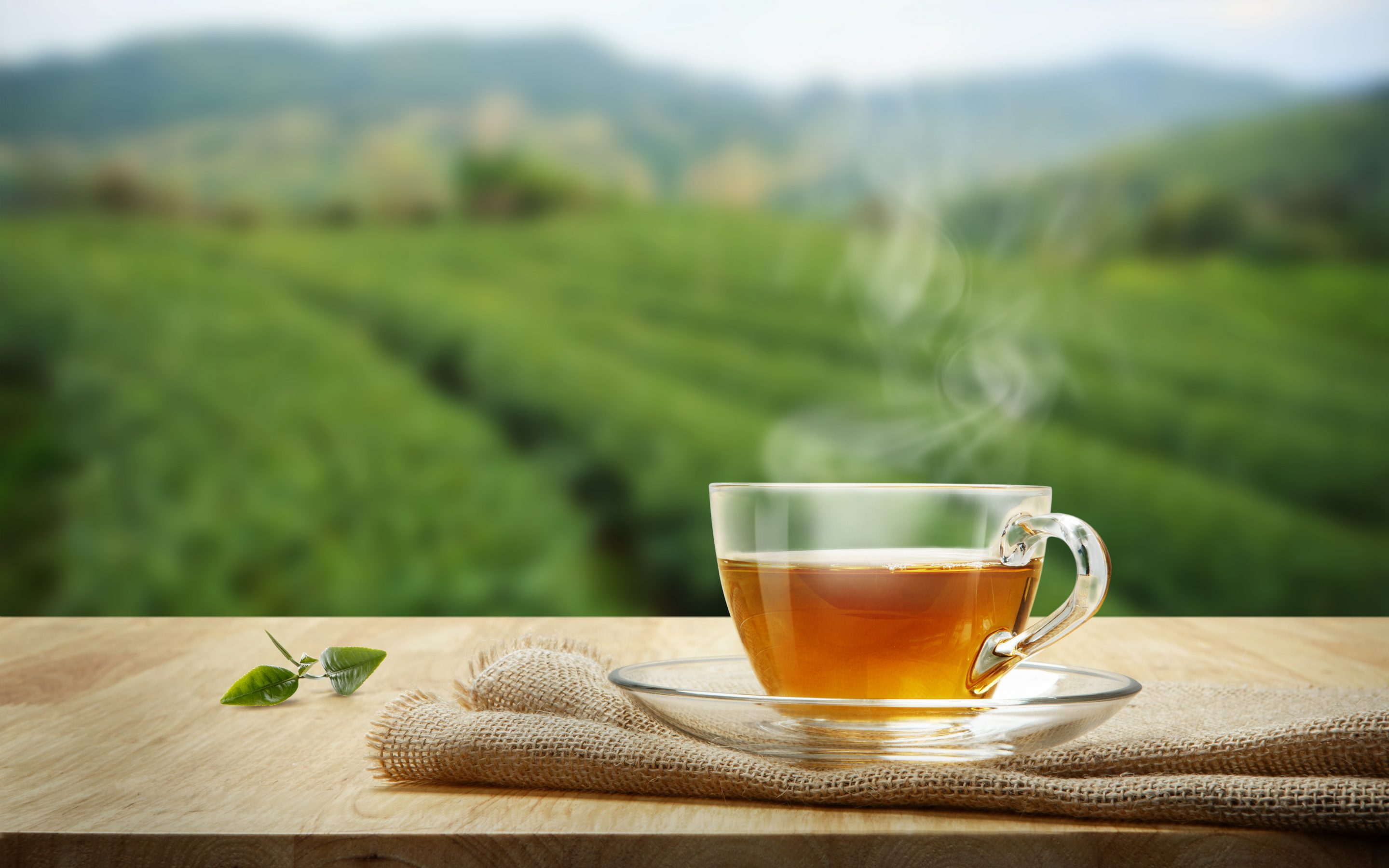tea in a glass cup in front of field of growing tea
