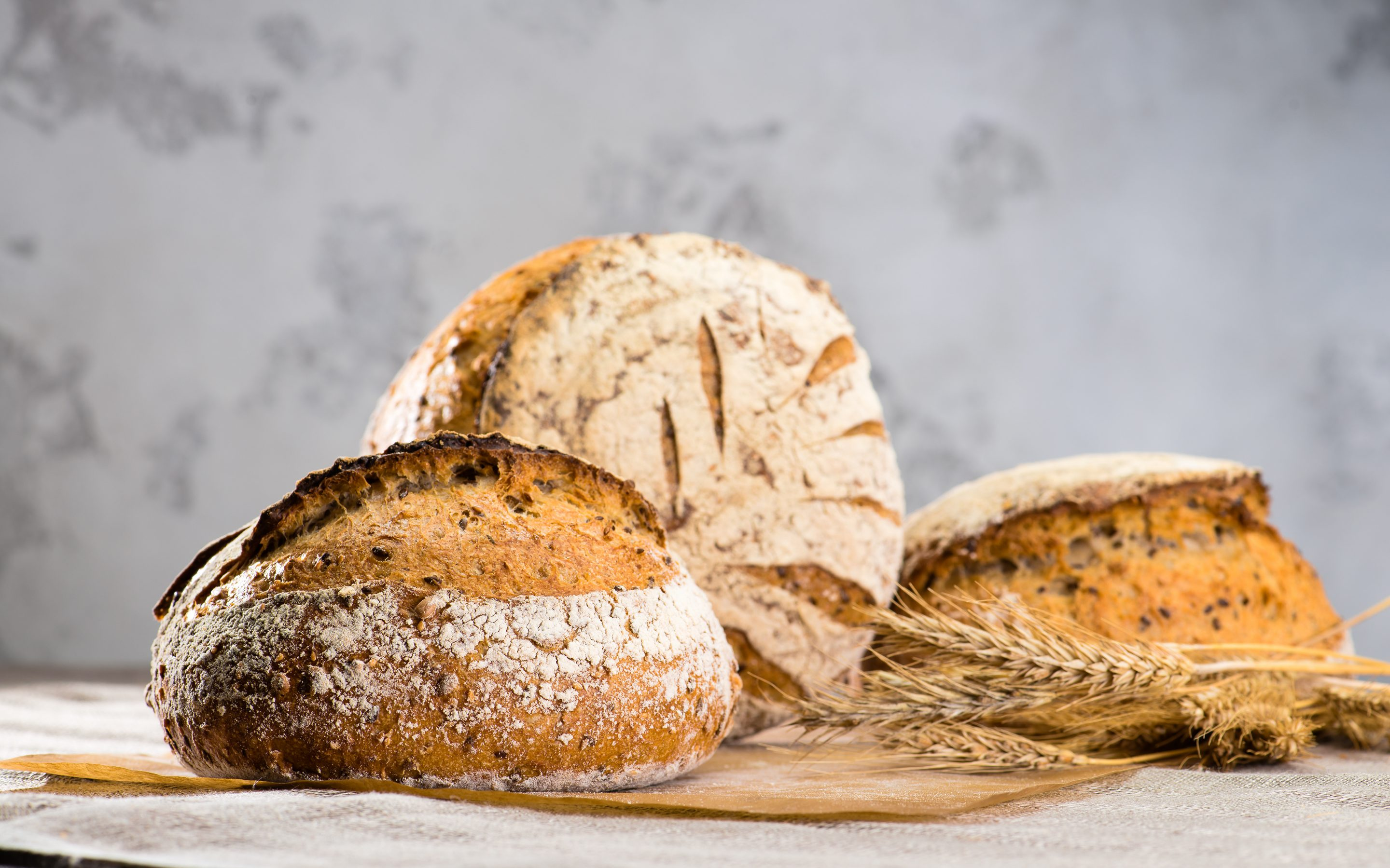 still life with a traditional round artisan rye bread loaves with walnut and seeds on wooden cutting board, near the wheat